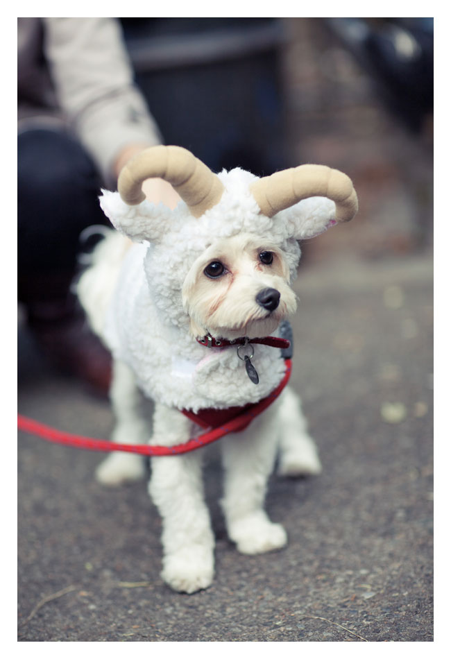 If You Need A Smile Today These Dog Halloween Costumes