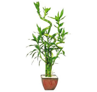 10 Magical Indoor Plants To Attract Love, Joy And Prosperity
